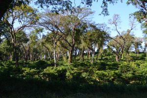 coffee plantations of Sakleshpur